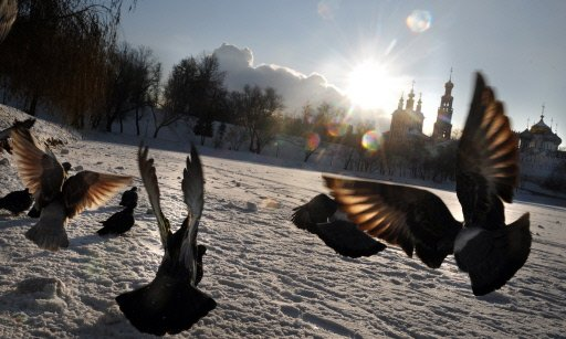 Russie: risque de famine pour les oiseaux sauvages