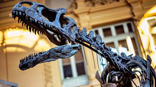 Le squelette de dinosaure vendu plus d'un million d'euros — Lyon