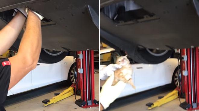 Il sauve un chaton coincé dans un pare-chocs