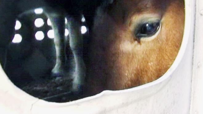 Alimentation : un vaste réseau européen de trafic de viande de cheval démantelé
