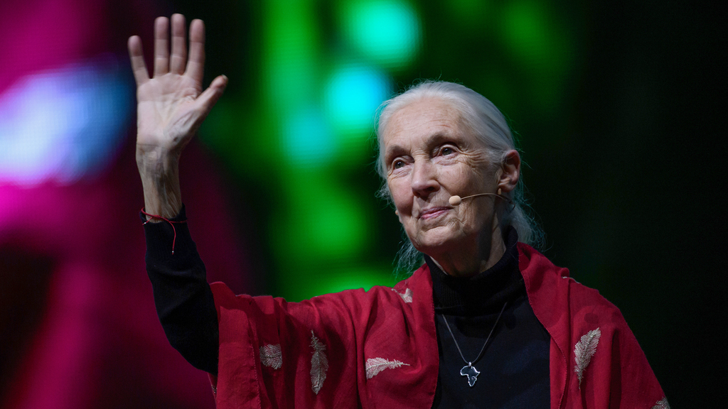 Luxembourg Peace Prize: Dame Jane Goodall awarded 2019 Prize for Outstanding Environmental Peace
