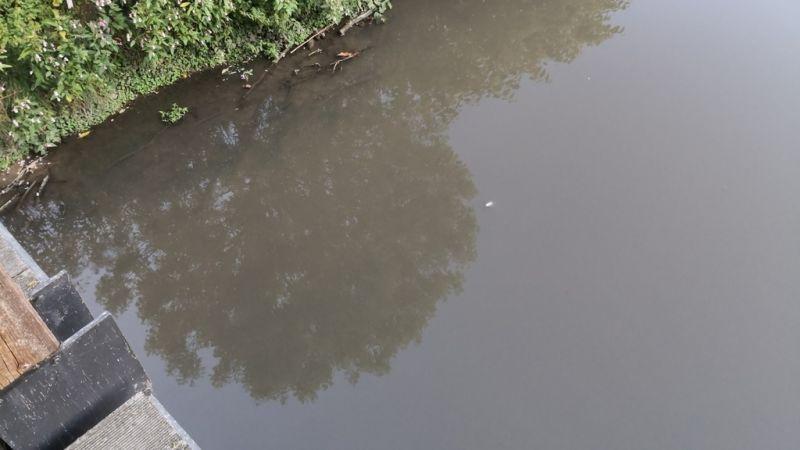Des poissons morts :Un chantier provoque la fuite d'eaux usées dans l'Alzette