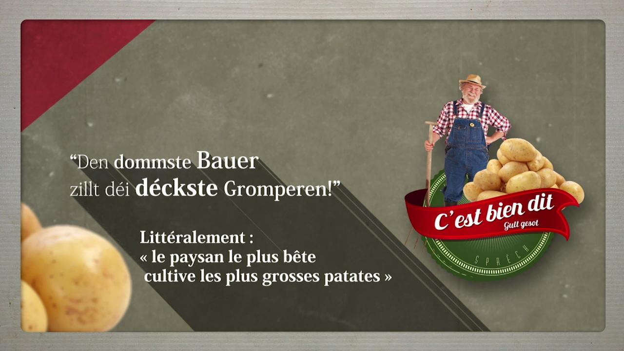 Le paysan le plus bête cultive les plus grosses patates  :Les expressions luxembourgeoises décodées