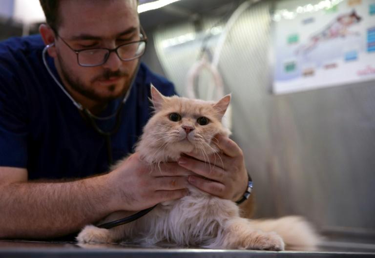Panique :Des demandes d'euthanasie arrivent déjà chez les vétérinaires