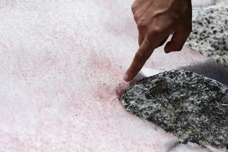 Insolite :La mystérieuse neige rose d'un glacier des Alpes italiennes
