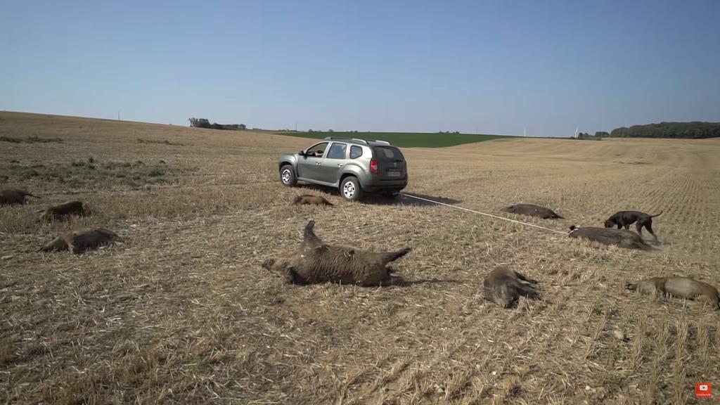 Lorraine :Une famille de sangliers écrasée volontairement par des véhicules