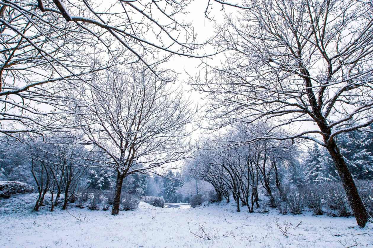 Alerte Météolux :Jusqu'à -10°C et des chutes de neige samedi