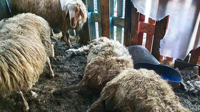 Horreur en Belgique :20 animaux sauvés in extremis, plusieurs cadavres découverts